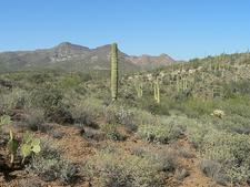 Cave Creek Trail 4 - Tonto National Forest - Arizona - USA