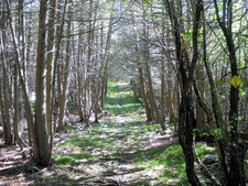Cemetery Trail 255 - Tonto National Forest - Arizona - USA