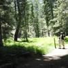 Champion Lodgepole Trail 1W11