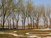 Chaoyang Park
