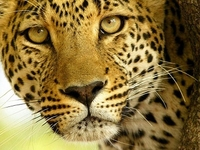 7 Days Kenya And Tanzania Classic Safari