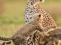 Kenyan Highlands and Masai Mara Safari