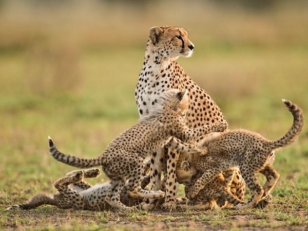 Kenyan Highlands and Masai Mara Safari Photos