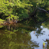Chickahominy River