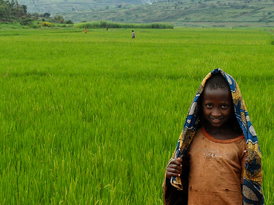 Children In Rice Fields - Rwanda