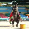 Childrens Grand Park Zoo Elephant