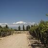 Chile - Vineyards