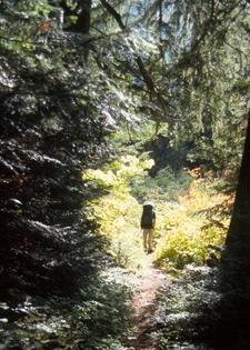 Chilliwack River Trails