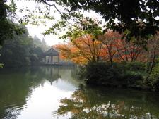 Misty Trees By Nine Streams
