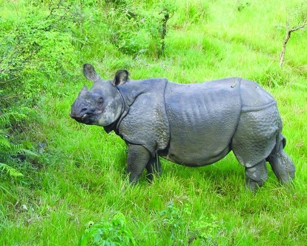 Jungle Safari Tour At Bardia National Park! Photos