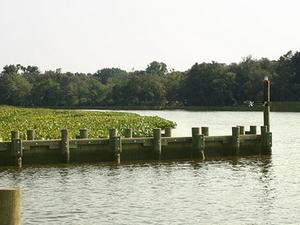 Choptank río