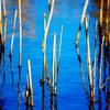 Christian Pond - Grand Tetons - Wyoming - USA