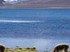 Chungara Lake And Nevado Sajama