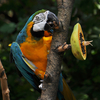Cincinnati Zoo Macaw
