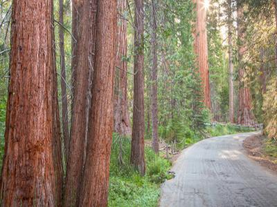 Clintonia Trail