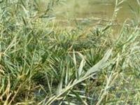 CUN - Szaporca sistema de lagos e remansos