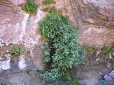 Coalpits Springs - Zion - Utah - USA
