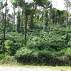 Coffee Plantation Near Sakleshpur
