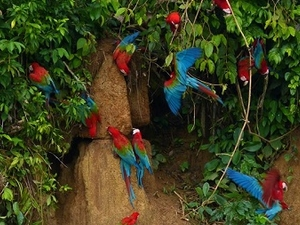 Amazon Manu National Park Photos