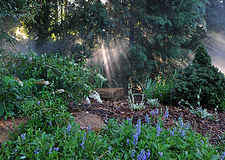 Conifer Garden - CFBG Fayetteville NC