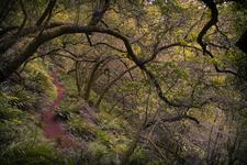 Coon Creek Trail 124 - Tonto National Forest - Arizona - USA
