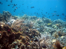 Coral Reef In The National Park