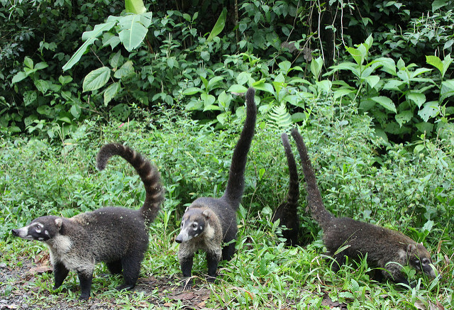 San Pedrillo Overnight Tour Corcovado National Park - Costa Rica Photos