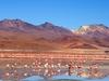 Cordillère Et Sud Lipez - La Laguna Colorada