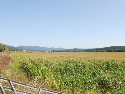 Corn Fields With Upper Tract In The Back