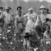 Cotton Planter And Pickers
