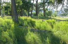 Cottonwood Grove - Dinosaur National Monument CO
