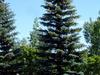 Crocus Park