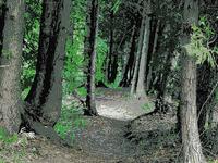 Cuff Button Trail 276
