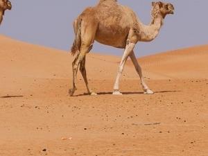 Cultural Tour of Oman Fotos