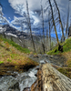 Cutoff Trail Views - Glacier - Montana - USA