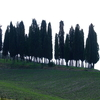 Cypresses Groove
