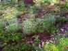 Caribou Rock Garden