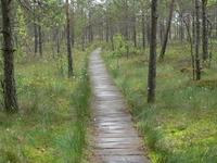 Dzūkija National Park