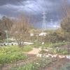 Honey Lane Farm