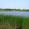 Chadwick Lake