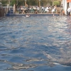 Clifton Lido Pool