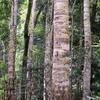 Nymboi-Binderay Parque Nacional