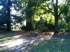 A Picnic Bench In Cook Park