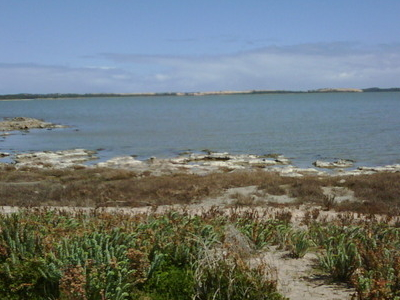The Coorong Looking Across Salt Creek
