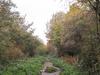 Copthall Railway Walk