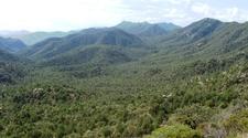 Coronado National Forest