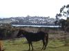 Horses On Eden