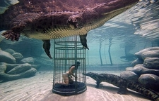 Woman Crocodile Cage Diving At Cango Wildlife Ranch