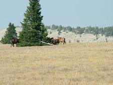 Custer Nf Wild Horses