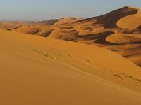 Desert Dream Experience